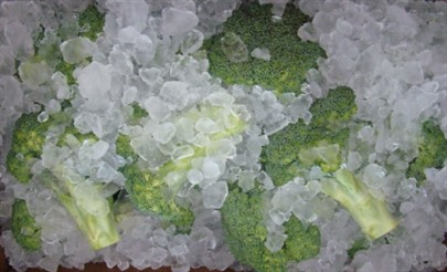 Web Broccoli